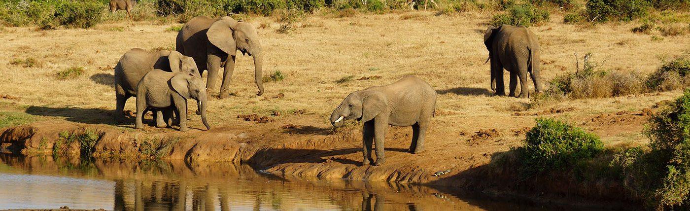 Elephant in Murchison Falls National Park
