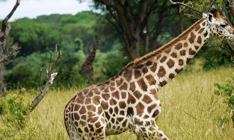 Murchison Falls Wildlife Safaris