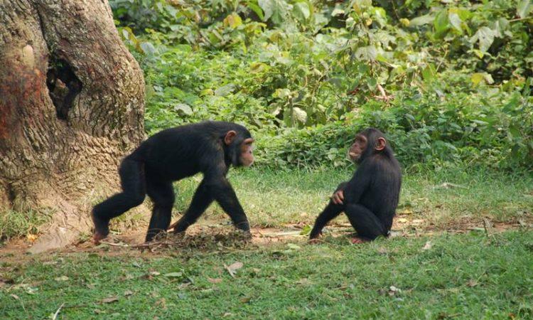 5 Days Murchison Falls safari