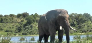 Wildlife in Murchison Falls