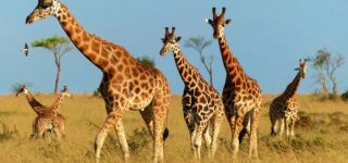 4 Days Murchison Falls Safari