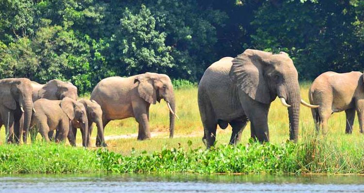 5 Days Prime Uganda Wildlife Safari