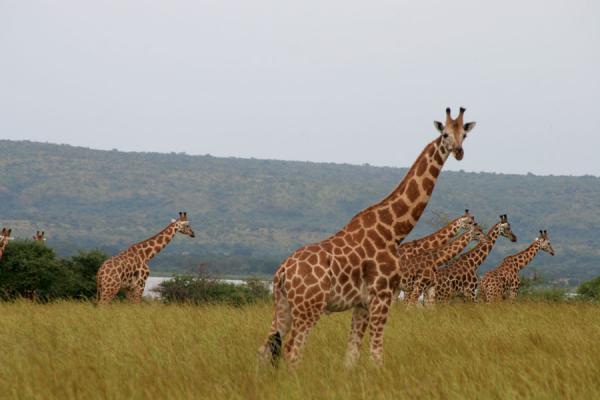 5 Days Wildlife and Gorillas Safari