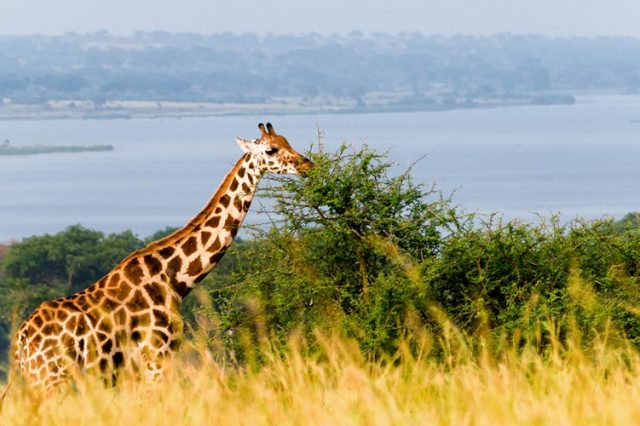 Best Area for Wildlife Viewing in Murchison Falls