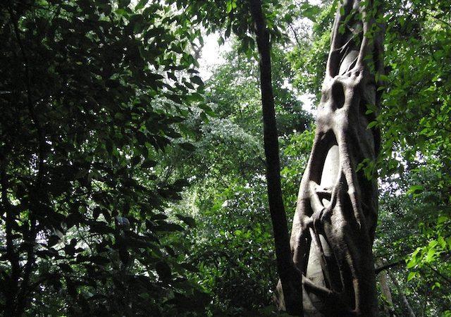 Kaniyo Padibi Forest