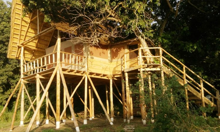 Murchison tree house