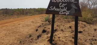 Shoebill Campsite