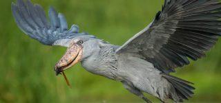 Birding Safaris