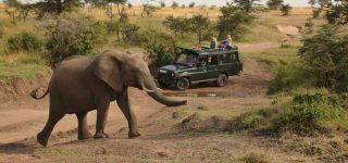Murchison Falls Game Viewing