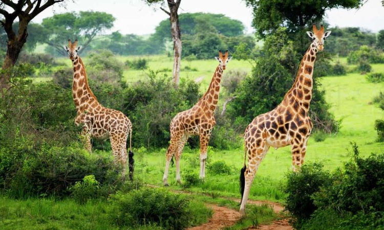 Murchison falls national park itinerary