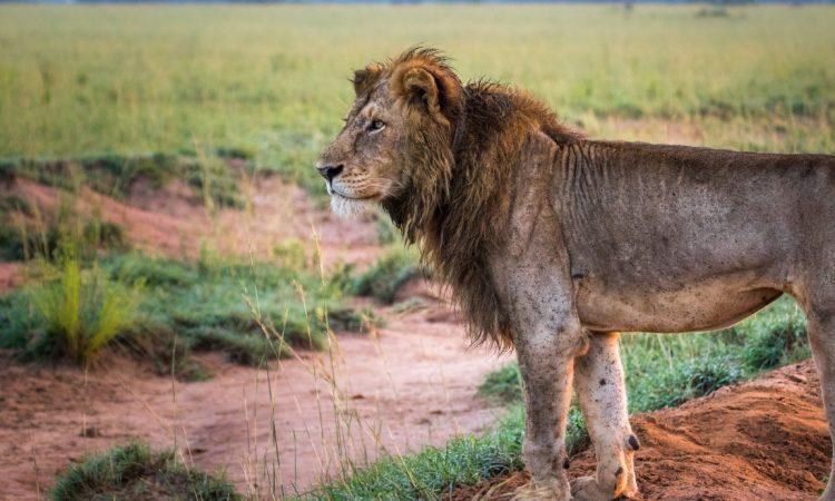 Murchison Falls Big5 Safari
