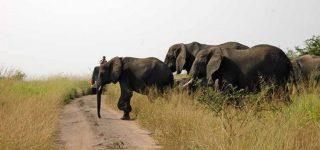 Buligi game reserve