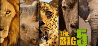 Murchison Falls Big Five