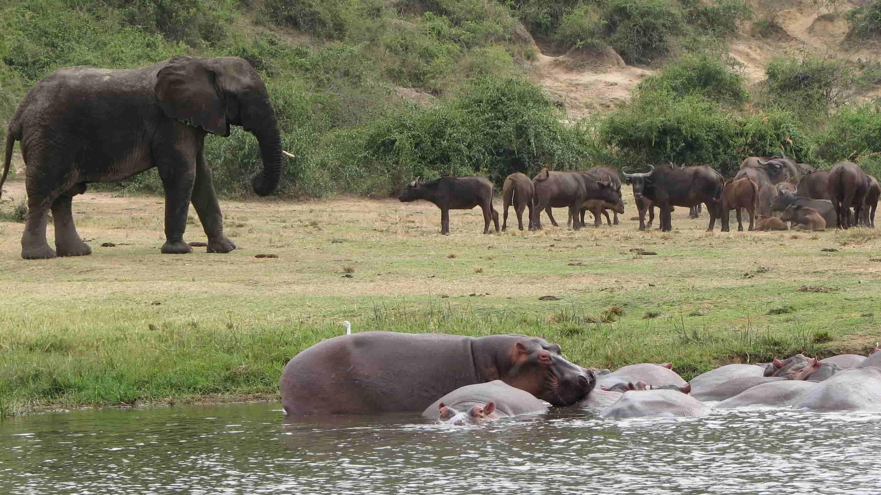 Wildlife at the Banks of Kazinga Channel