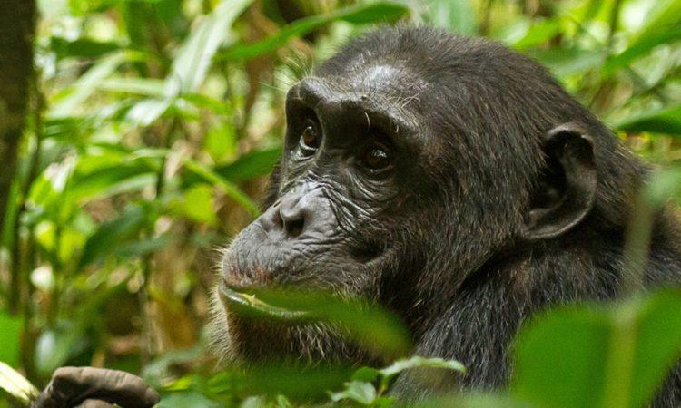 """Image result for kibale national park"""""""