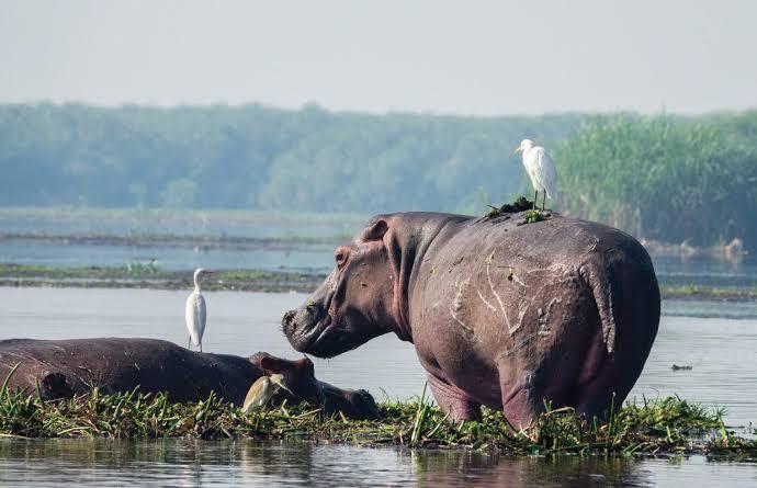 Uganda Safari in Murchison Falls National Park