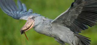 Birds of Murchison Falls National Park