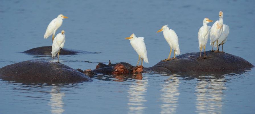 4 Days Murchison falls Birding Tour