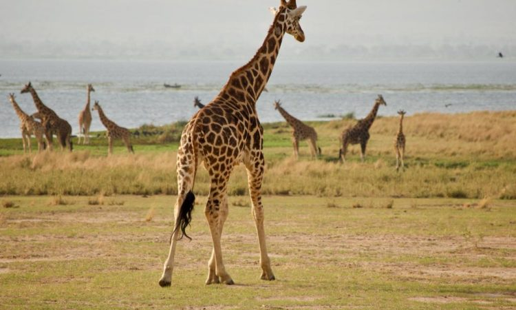 9 Days Murchison Falls, Kidepo and Pian Upe Wildlife Safari