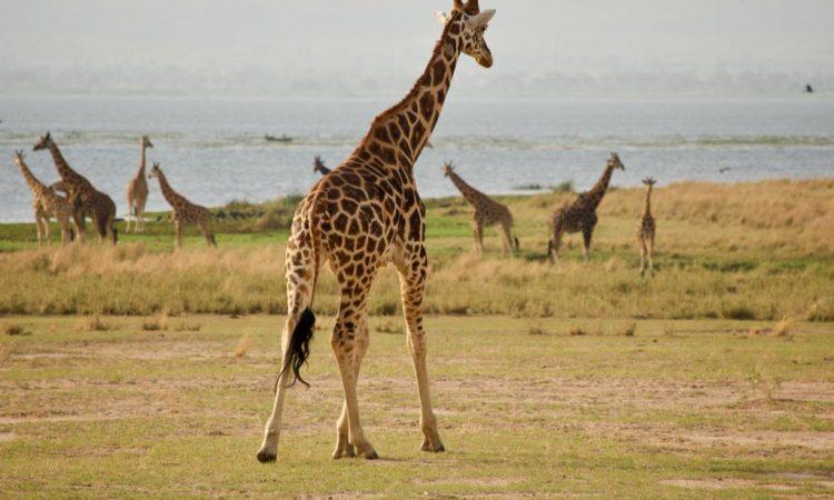 9 Days Murchison Falls, Kidepo and Pian Upe Wildlife Safari