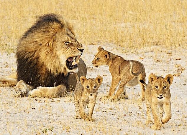 14 Days Uganda Wildlife Experience