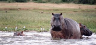 14 Days Uganda Wildlife Experience