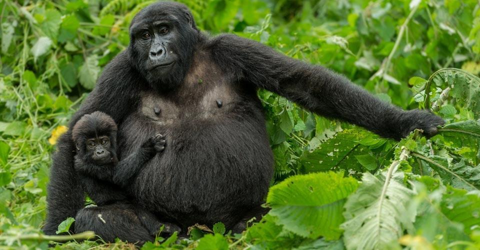 18 Days Uganda Wildlife Adventure
