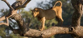 12 Days Uganda Wildlife Experience
