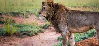 5 Days Murchison Falls Wildlife & Chimpanzee Safari
