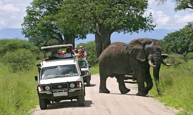 Game Drive Safari in Uganda