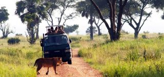Things to do in Murchison falls National Park