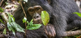 Top Things to do in Kibale National Park