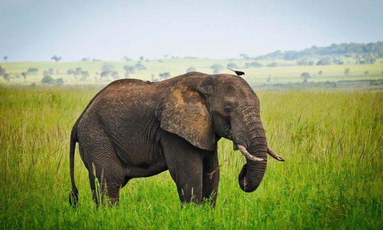 5 Days Sipi falls and Murchison falls Wildlife Safari