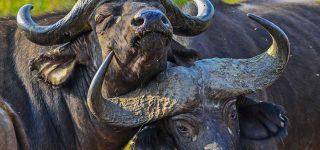 8 Days Best Uganda Safari