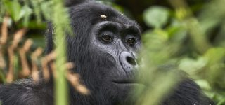 9 Days Uganda Big 5 & Primates Safari
