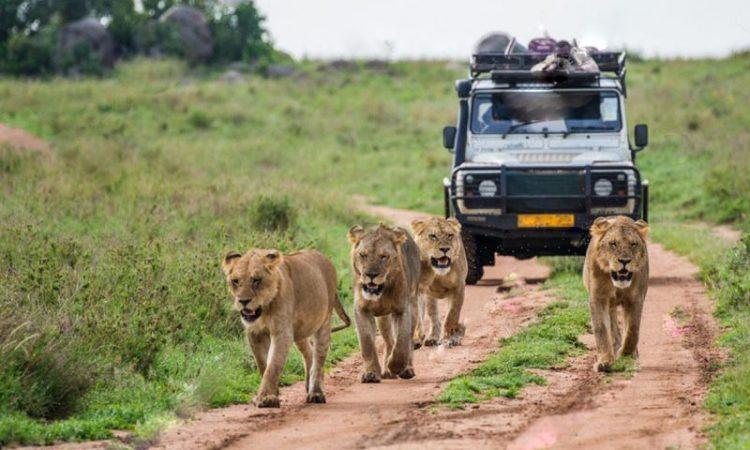 Top 8 Safari Activities in Uganda