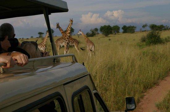 6 Days Murchison falls and Lake Mburo national park safari